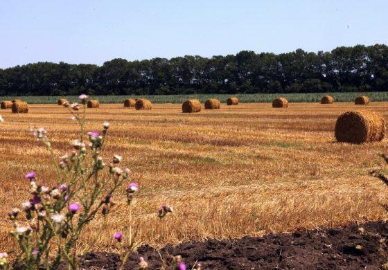 Без европейските субсидии българските земеделци са на загуба