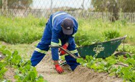 Британските фермери вече тъгуват за българите и румънците