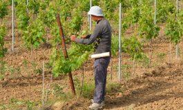 На Острова притеснени, няма българи и румънци да прибират реколтата
