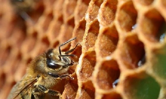 И пчеларите готвят национален протест
