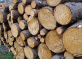 22 кубика незаконни дърва откриха в четири къщи в село Гроздьово