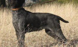 78-годишен простреля домашно куче в село Старо Оряхово