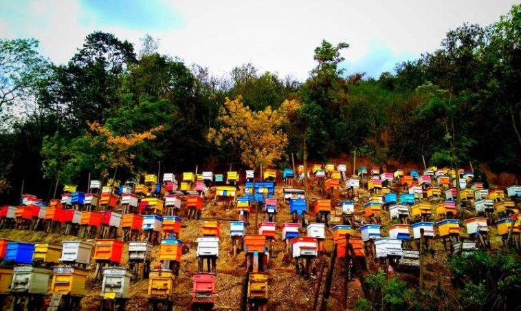 Могат ли да изчезнат пчелите във Варненско? (ВИДЕО)