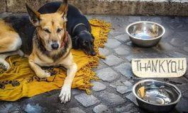 Нидерландия – първата страна без бездомни кучета