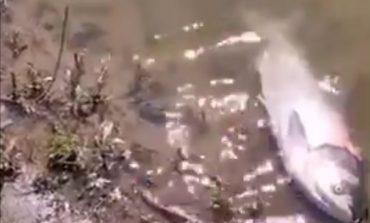 Рибарска война по време на Пандемия (снимки, видео)