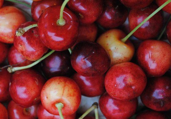 Черешите от Приселци тази година са по-дребни заради сушата