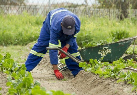 Гърция въвежда нови правила за сезонните работници