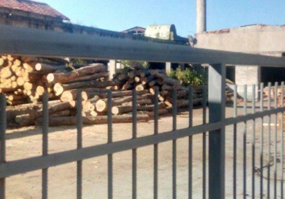 След дървената мафия в Котел, ще подхване ли Гешев и тази в Тетевен?
