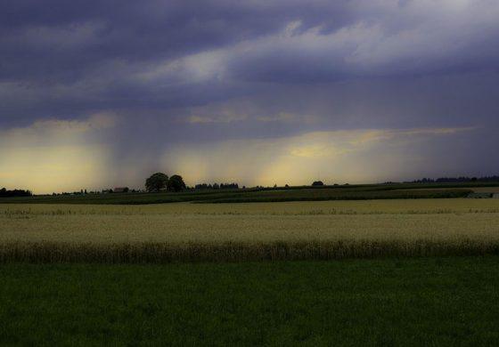 Радост за земеделците: Вали в цялата област Добрич, есенниците изглеждат добре