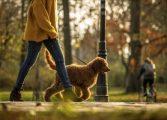 Разходката в парка намалява стреса от работата