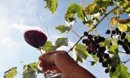Избират най-добрите винари за 2020-а в Бяла