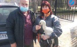 Служители на Община Ветрино спасиха щъркел в безпомощно състояние (снимки)