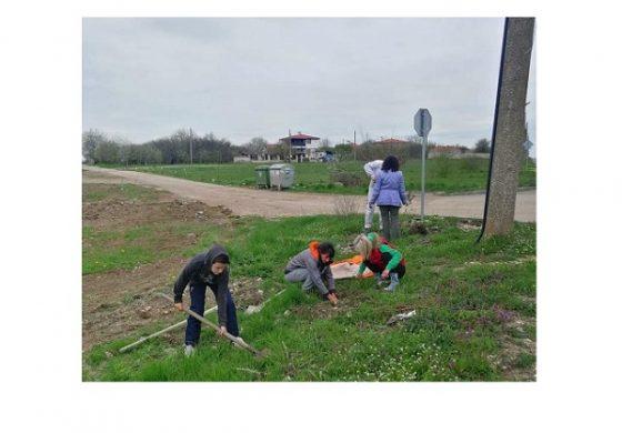 Жителите на село Изгрев в община Суворово засадиха 55 дръвчета